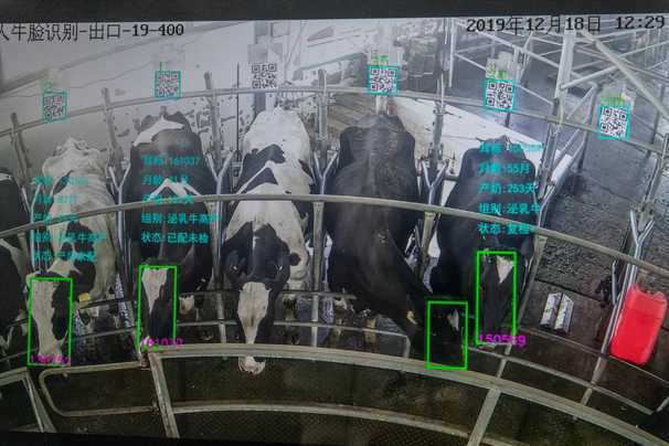Orwell's nightmare? Facial recognition for animals promises a farmyard revolution.