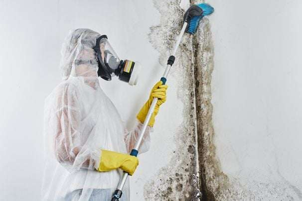 Mold is an expensive and dangerous problem. Here's how to get ahead of it.