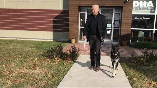 Biden injures foot while playing with his dog, will probably need walking boot