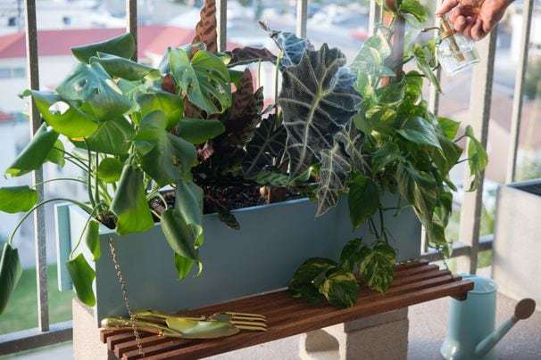 Online plant sellers are having a moment. Here's where to shop.