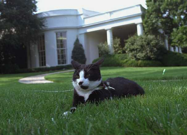 Biden has had his dog days. Now he'll join the club of 'cat people' world leaders.