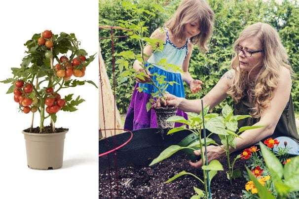 Container gardens let you grow food in a small space