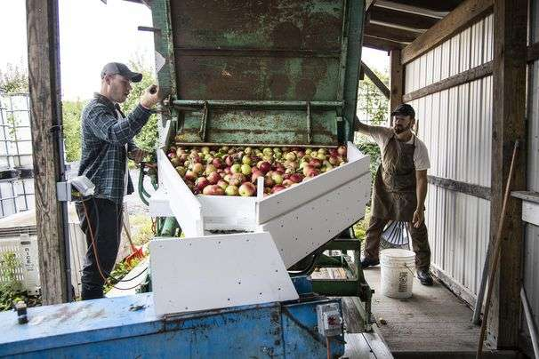 Apple growers in Pennsylvania's South Mountain tap into America's taste for cider