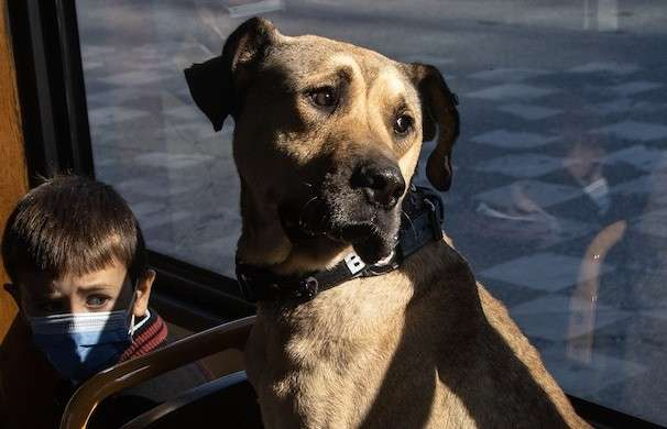 Photos: Meet the Istanbul street dog who's become a sensation